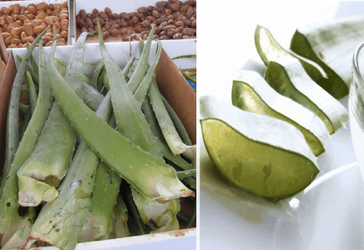 "Aloe vera, called ""nha dam"" in Vietnamese, is readily available at the markets but it's impractical to carry the leaf around during your travels."