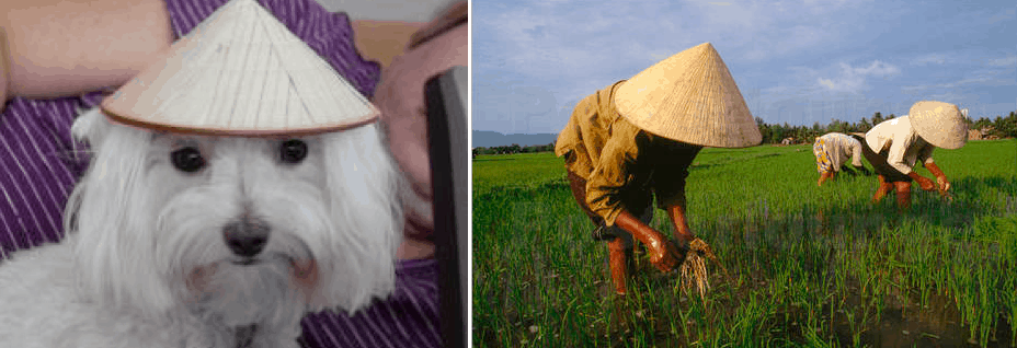 People aren't the only ones that wear the 'non la' in their everyday lives. :)