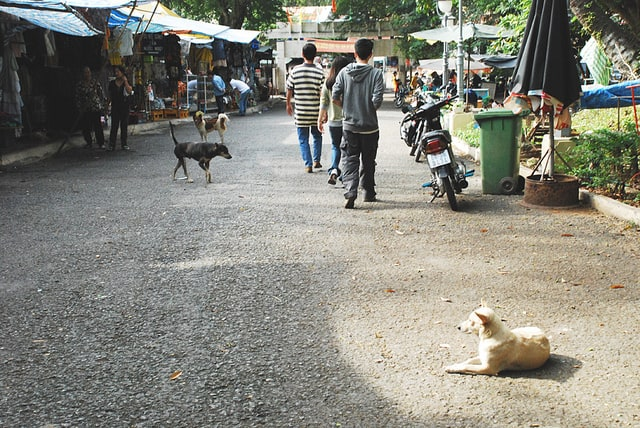 Stray animals are commonly found out and about on the streets, but it is best to not pet them or come into contact with them.