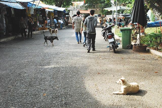 Streunende Tiere sind Häufig auf den Straßen, aber am besten ist es, nicht streicheln oder mit Ihnen in Kontakt kommen.