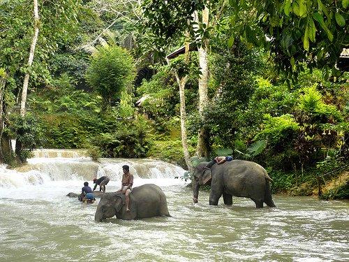 Children riding elephants crossing streams in Buon Me Thuot
