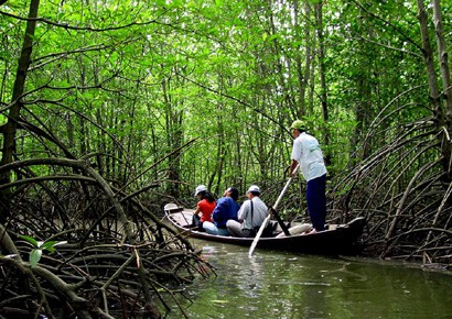 can gio mangrove forest canoe ride