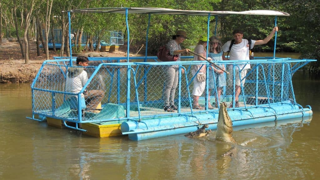 Tourists are feeding Crocodiles at Vam Sat Center Can Gio - Ho Chi Minh City day trip